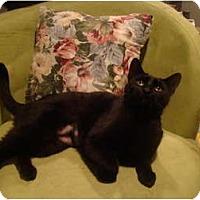 Adopt A Pet :: Hildi - Muncie, IN