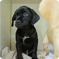 Adopt A Pet :: Butch Cassidy - Cumming, GA