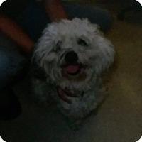 Adopt A Pet :: Dash ADOPTION PENDING!! - Antioch, IL
