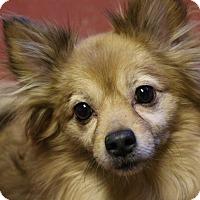 Adopt A Pet :: Mister - Winters, CA