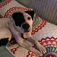 Adopt A Pet :: Bella - Decatur, AL