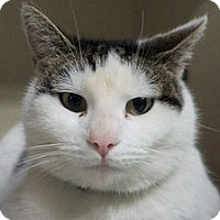 Adopt A Pet :: Julian - Redwood City, CA