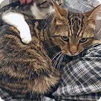 Adopt A Pet :: Jagalu - Mississauga, Ontario, ON