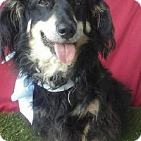 Adopt A Pet :: JOEY - Irvine, CA