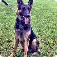 Adopt A Pet :: Charlie - Danbury, CT