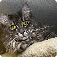 Adopt A Pet :: Gabby - Lombard, IL