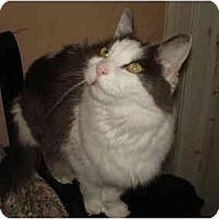 Adopt A Pet :: Liam - Chesapeake, VA
