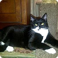 Adopt A Pet :: Hardy - San Jose, CA