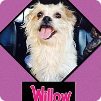 Adopt A Pet :: Willow - El Campo, TX