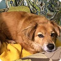 Adopt A Pet :: Winnie - Homewood, AL