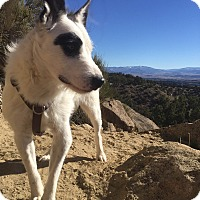 Adopt A Pet :: Orrie - Denver, CO