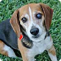Adopt A Pet :: Ben (and Sandy) - Bellflower, CA