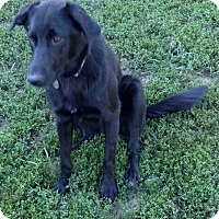 Adopt A Pet :: Karmer - St Louis, MO