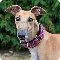 Adopt A Pet :: Fiat - Seattle, WA