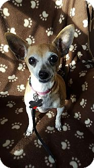 Chihuahua Mix Dog for adoption in Romeoville, Illinois - Violet