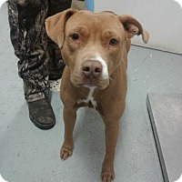 Adopt A Pet :: Chips - Fayetteville, WV