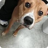 Adopt A Pet :: Gandolph - Paducah, KY