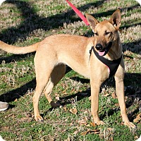 Adopt A Pet :: TAMMY - Carrollton, TX