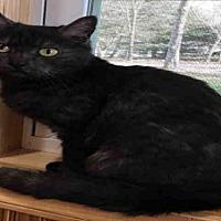 Adopt A Pet :: PUMA THURMAN - Canfield, OH
