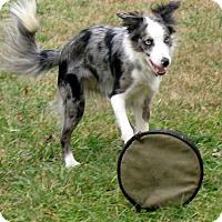 Adopt A Pet :: Jolene - All Cities, SC