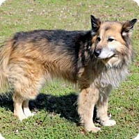 Collie/Husky Mix Dog for adoption in Hagerstown, Maryland - KILLIAN