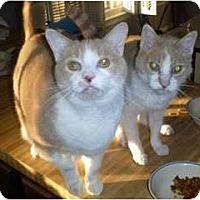 Adopt A Pet :: Pippin & Piglet - Alexandria, VA