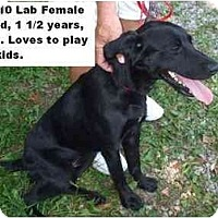 Adopt A Pet :: # 364-10 - ADOPTED! - Zanesville, OH