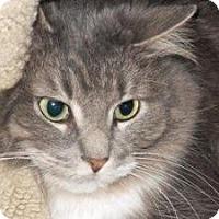 Adopt A Pet :: Irma - Milwaukee, WI