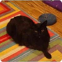Adopt A Pet :: Trooper - Muncie, IN