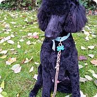 Adopt A Pet :: Rudy - Adoption Pending - Gig Harbor, WA