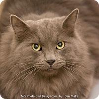 Adopt A Pet :: Yuri - Fountain Hills, AZ