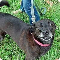 Adopt A Pet :: BAILEY - Louisville, KY