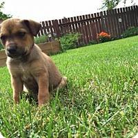 Adopt A Pet :: Denali - Saskatoon, SK