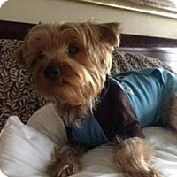 Adopt A Pet :: Buster - Beavercreek, OH