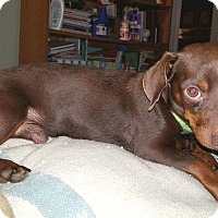 Adopt A Pet :: Hershey - Andalusia, PA