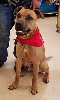 Shepherd (Unknown Type) Mix Puppy for adoption in Newcastle, Oklahoma - Thibodeau