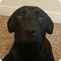 Adopt A Pet :: Marie - Sunnyvale, CA
