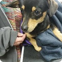 Adopt A Pet :: Flower - Fresno CA, CA