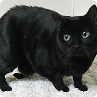 Adopt A Pet :: Annie - Gary, IN