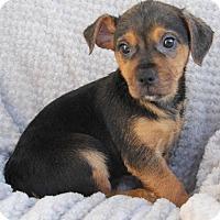 Adopt A Pet :: Betty - Yuba City, CA