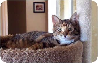 Calico Cat for adoption in Palmdale, California - Sarah
