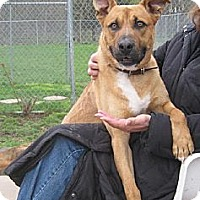 Shepherd (Unknown Type) Mix Dog for adoption in New York, New York - Jay