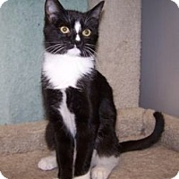 Adopt A Pet :: K-Dave3-Nola - Colorado Springs, CO