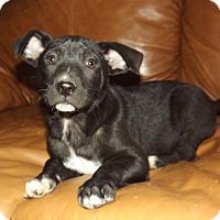 Adopt A Pet :: Nipper - Phoenix, AZ