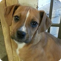 Adopt A Pet :: Cindy Lou*ADOPTED!* - Chicago, IL