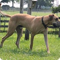 Adopt A Pet :: Bentley - Woodstock, IL
