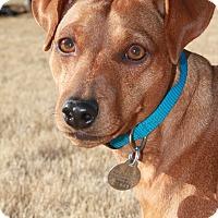Adopt A Pet :: Elliot - Marietta, GA