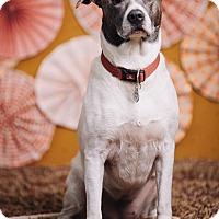 Adopt A Pet :: Gisella - Portland, OR