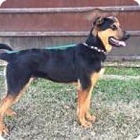 Adopt A Pet :: Zeus - Rexford, NY