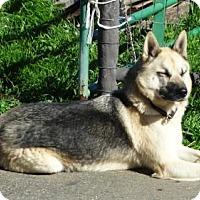 Adopt A Pet :: Jake - Vacaville, CA